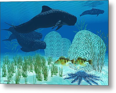 Pilot Whales Metal Print by Corey Ford