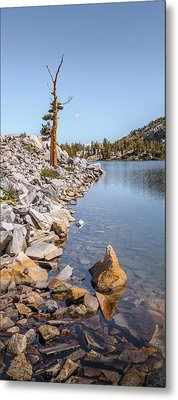 Metal Print featuring the photograph Pine And Rock by Alexander Kunz