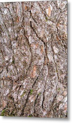 Metal Print featuring the photograph Pine Bark Abstract by Christina Rollo