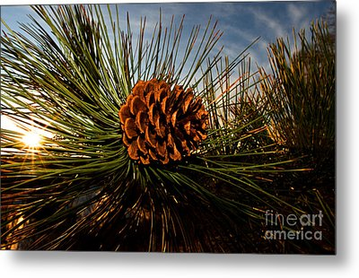 Pine Cone Metal Print by Terry Elniski