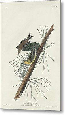 Pine Creeping Warbler Metal Print