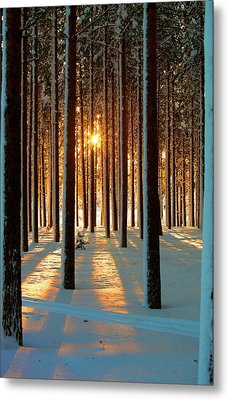 Pine Forest Metal Print