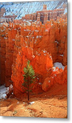 Pine Hoodoos At Bryce Canyon Metal Print by Pierre Leclerc Photography