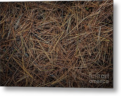 Pine Needles On Forest Floor Metal Print by Elena Elisseeva
