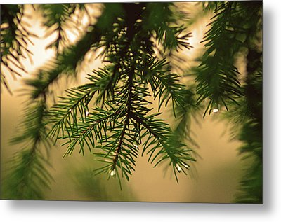 Metal Print featuring the photograph Pine by Robert Geary
