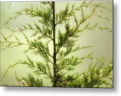 Metal Print featuring the photograph Pine Shower by Brian Wallace