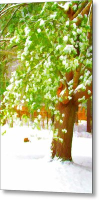 Pine Tree Covered With Snow 1 Metal Print by Lanjee Chee