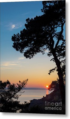 Metal Print featuring the photograph Pine Tree by Delphimages Photo Creations