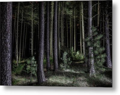 Pine Tree Forest At Night Metal Print by Dirk Ercken