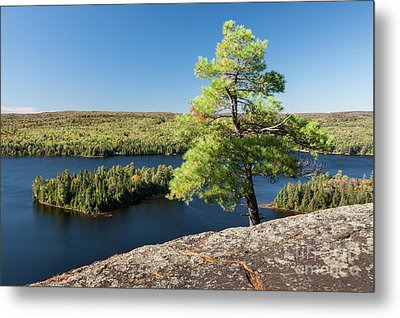 Metal Print featuring the photograph Pine Tree With A View by Elena Elisseeva