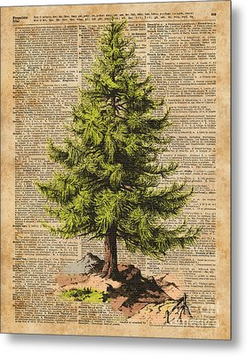 Pine Tree,cedar Tree,forest,nature Dictionary Art,christmas Tree Metal Print by Jacob Kuch