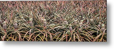 Metal Print featuring the photograph Pineapple Pano by Heather Applegate