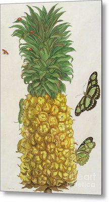 Pineapple With Caterpillar And Butterflies Metal Print