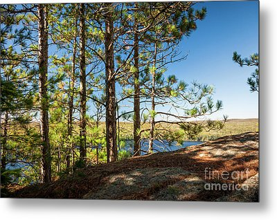 Metal Print featuring the photograph Pines On Sunny Cliff by Elena Elisseeva
