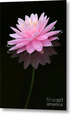 Pink And Alone Metal Print by Sabrina L Ryan