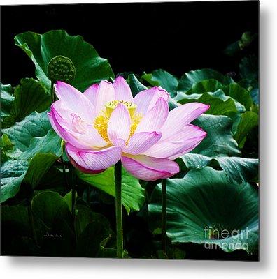 Pink And Green Floral Garden Ballet 11u Lotus Bloom Metal Print