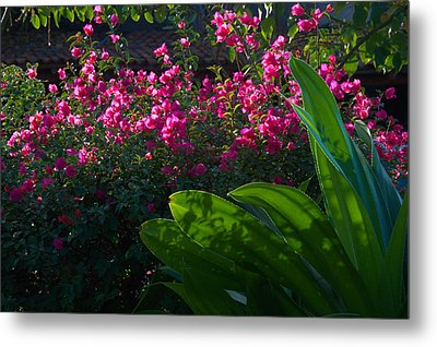 Pink And Green Metal Print by Jim Walls PhotoArtist