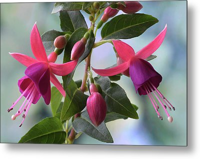 Metal Print featuring the photograph Pink And Purple Fuchsia by Terence Davis