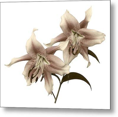 Elegant Lilies Metal Print
