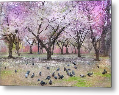 Metal Print featuring the photograph Pink And White Spring Blossoms - Boston Common by Joann Vitali