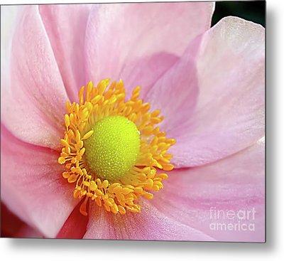 Pink Anemone Metal Print by Kaye Menner