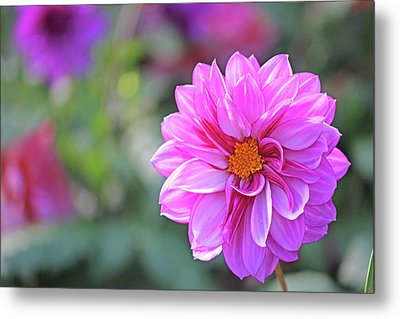Pink Beauty Metal Print by Becky Lodes