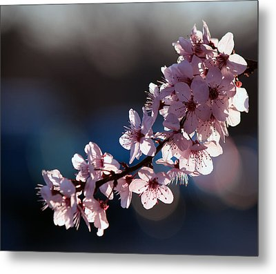 Pink Blossoms Metal Print by Don Gradner