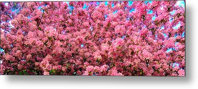 Pink Blossoms Of Spring Metal Print