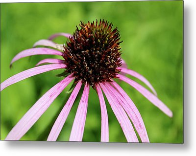 Metal Print featuring the photograph Pink by Christie Minalga