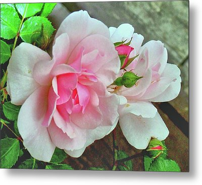 Metal Print featuring the photograph Pink Cluster Of Roses by Janette Boyd