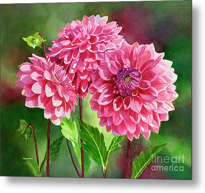 Pink Dahlias With Background Metal Print by Sharon Freeman