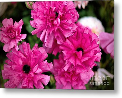 Metal Print featuring the photograph Pink by Diana Mary Sharpton