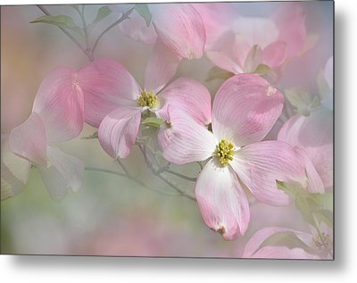 Pink Dogwood 02 Metal Print by Ann Bridges