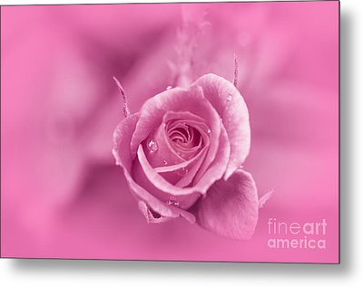 Pink Dream Metal Print by Charuhas Images