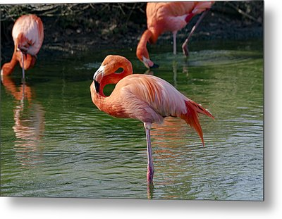 Metal Print featuring the photograph Pink Flamingo by Scott Carruthers