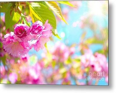 Pink  Flower Beautiful Metal Print by Boon Mee