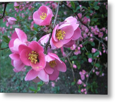 Pink Flowers Metal Print by Gonca Yengin
