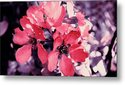 Pink Flowers Metal Print by Nat Air Craft