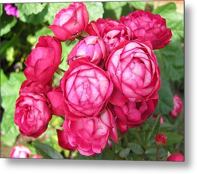 Pink Flowers Metal Print by Richard Mitchell
