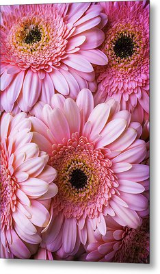 Pink Gerbera Daisy Bunch Metal Print by Garry Gay
