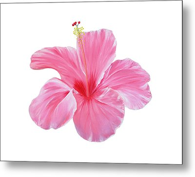 Metal Print featuring the painting Pink Hibiscus by Elizabeth Lock