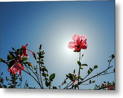 Pink Hibiscus Flowers Metal Print by Tetyana Kokhanets
