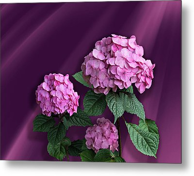 Pink Hydrangea Metal Print by Judy Johnson