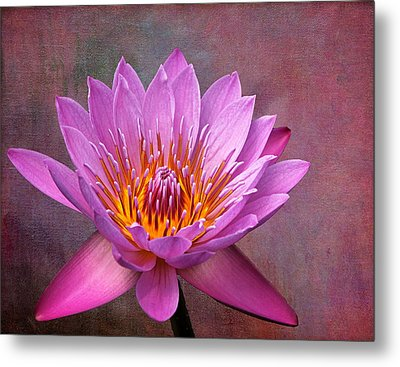 Pink Lady Metal Print by Judy Vincent