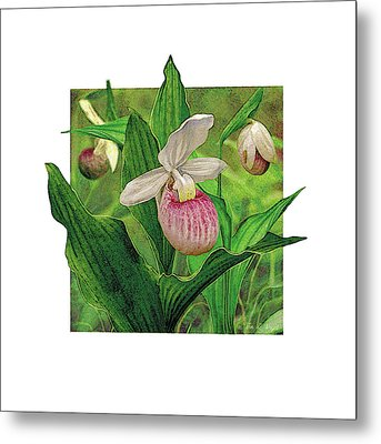 Pink Lady Slipper Metal Print by JQ Licensing