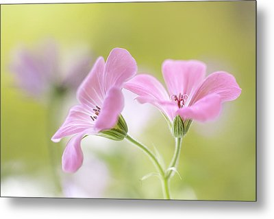 Pink Melody Metal Print by Mandy Disher