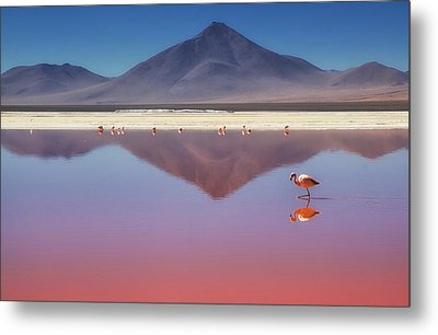 Pink Morning Metal Print by Margarita Chernilova