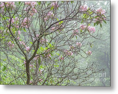 Metal Print featuring the photograph Pink Mountain Laurel by Chris Scroggins