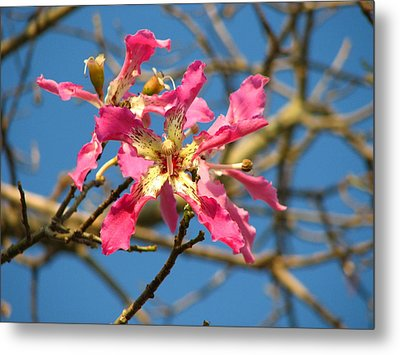 Pink Orchid Tree Metal Print by Carla Parris