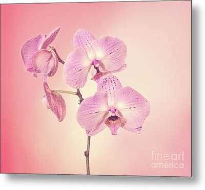 Metal Print featuring the photograph Pink Orchids 2 by Linda Phelps